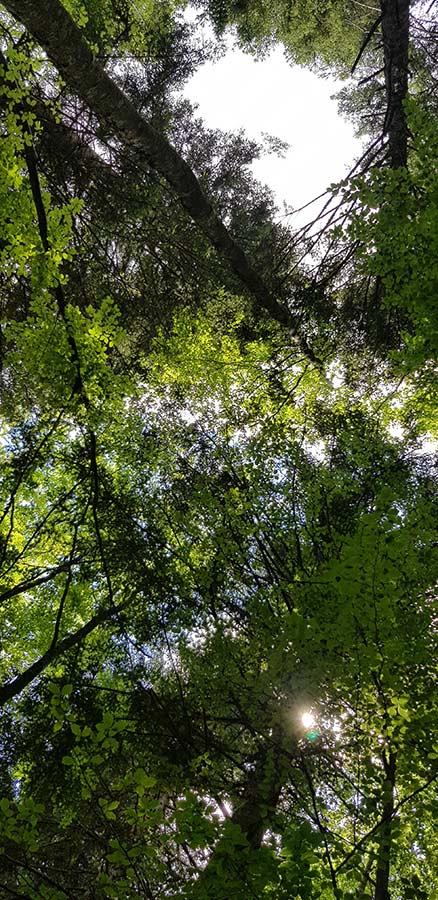 Appennino Tosco Emiliano alberi
